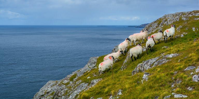 Wild Atlantic Websites - follow the right steps