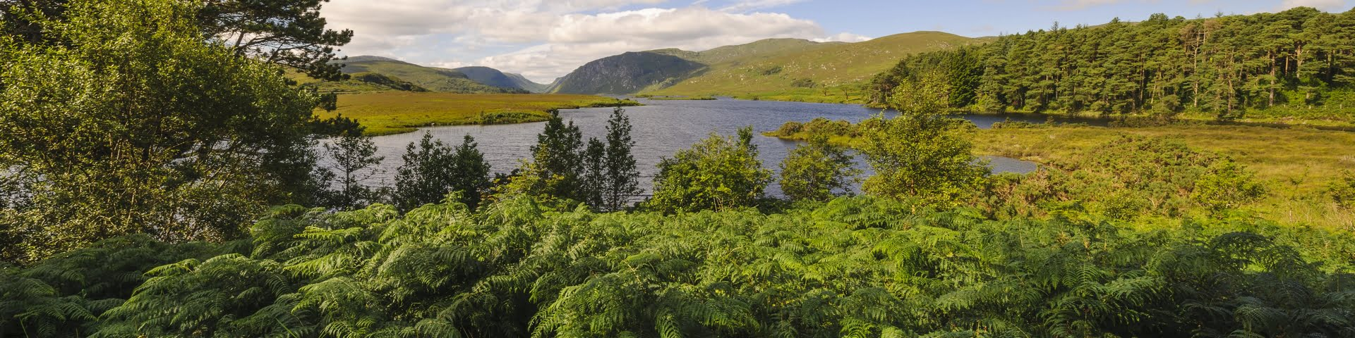 Wild Atlantic Websites - see the wood for the trees